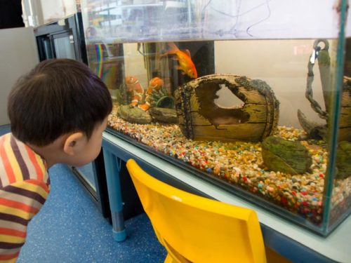 Early Learning Centre Massey Fish